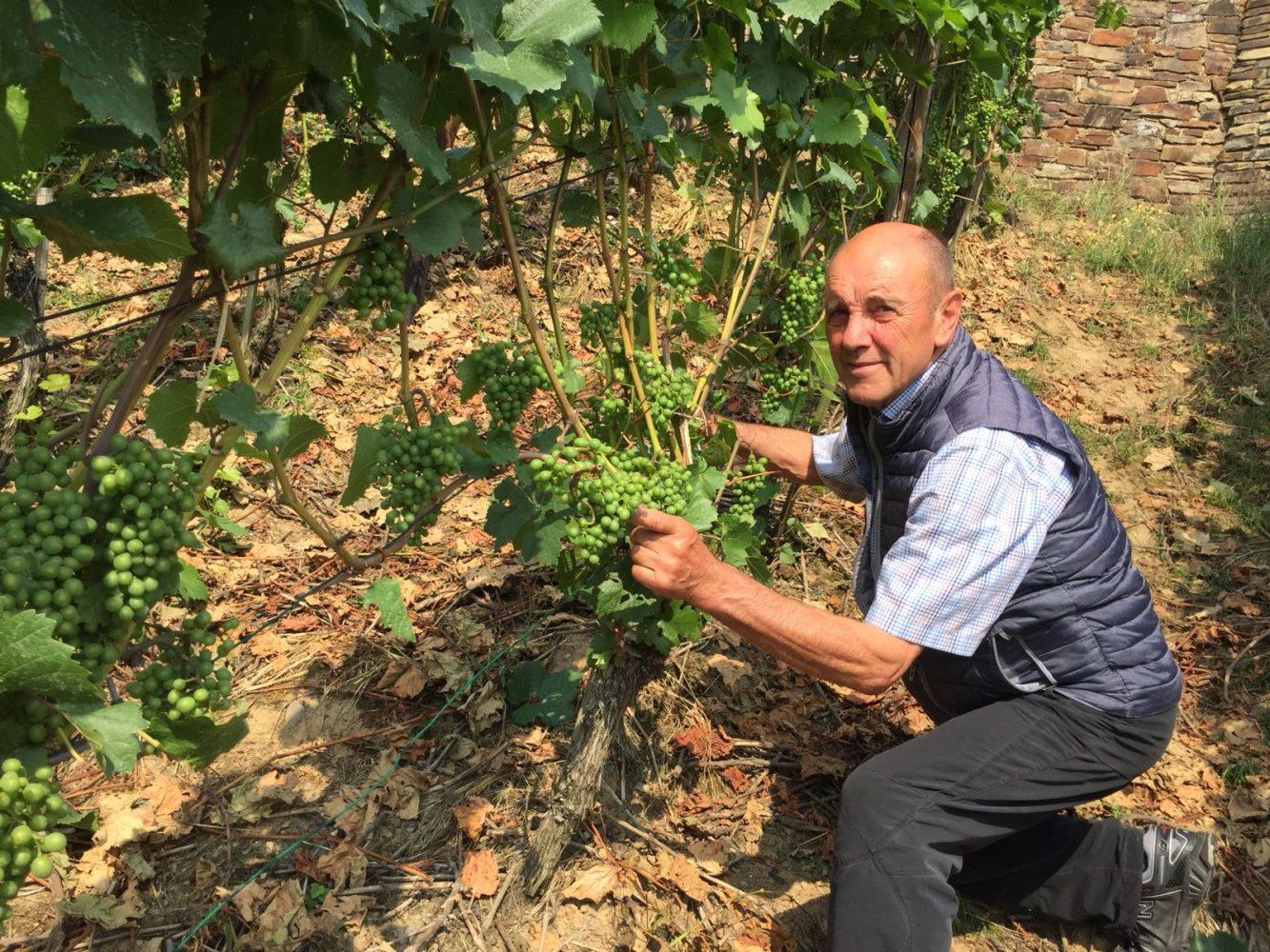 Weinbaupräsident Hubert Pauly erklärt die Funktion der Weinblätter für die Ertragsbildung