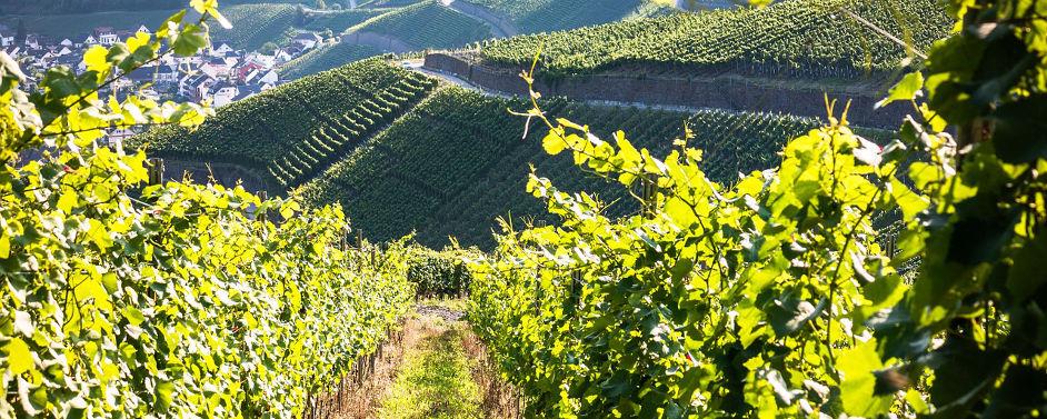 Pflanzenschutz im Weinbau: Sachkundelehrgang an der Ahr